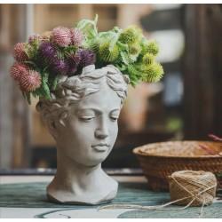 اصيص نباتات رأس